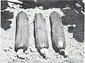 Bolgiano's spring 1971 (1971) (20203129810).jpg