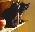 Bookends (2520136022).jpg