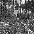 Bosbewerking, arbeiders, boomstammen, gereedschappen, Bestanddeelnr 251-9130.jpg