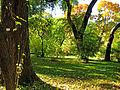 Botanička bašta Jevremovac, Beograd - jesenje boje, svetlost i senke.jpg