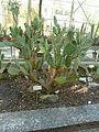 BotanicGardensPisa (109).JPG