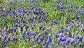 Botanic Garden - Cluj Napoca (2439443374).jpg