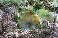 Botanic garden5.jpg