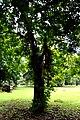 Botanic garden limbe126.jpg