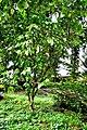 Botanic garden limbe16.jpg