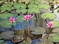 Botanical Garden of Peradeniya 02.jpg
