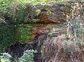 Bower bird glenbrook rly.jpg