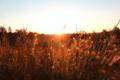 BrachterWald bei Sonnenaufgang13.png