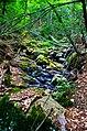 Bradley Brook - panoramio.jpg