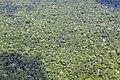 Brazilian Amazon.jpg