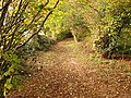 Bridlepath in autumn - geograph.org.uk - 1126851.jpg