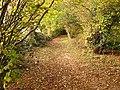 Bridlepath in autumn - geograph.org.uk - 1126851.jpg