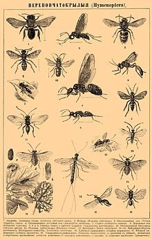 Brockhaus and Efron Encyclopedic Dictionary b45 254-0.jpg