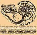 Brockhaus and Efron Encyclopedic Dictionary b76 740-0.jpg