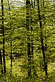 Buchberg Waldimpression 20200415 04.jpg