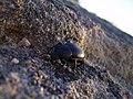 Bug - panoramio - fabiolah.jpg