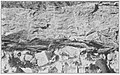 Bulletin 799 Plate 4B Basal Conestoga Slate and Vintage Dolomite.jpg