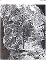 Bulletin of the British Museum (Natural History). Geology. (1989) (20258449420).jpg