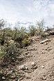 Butcher Jones Trail to Pinter's Point Loop, Tonto National Park, Saguaro Lake, Ft. McDowell, AZ - panoramio (141).jpg