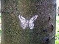 Butterfly (4456681639).jpg