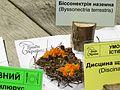 Byssonectria terrestris Kiev1.jpg