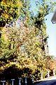 Côté du jardin au Tampon (3228270812).jpg