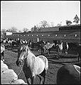 CH-NB - USA, Lexington-KY- Pferde (Lokalisierung unsicher) - Annemarie Schwarzenbach - SLA-Schwarzenbach-A-5-09-049.jpg