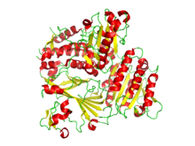 COPIIprotein.png
