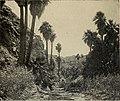 California south tehachapi.. (1900) (14777525554).jpg