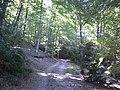 Camí Ral de Via a Olot per la zona de Santcrist (octubre 2011) - panoramio.jpg