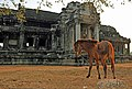 Cambodia-2628 - Horse wanted a book from the library. (3615334242).jpg
