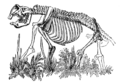 Cambridge Natural History Mammalia Fig 073.png