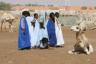 Agriculture in Mauritania - A camel market in Nouakchott