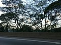 Caminho do Mar - SP - panoramio (1).jpg
