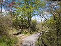 Camino Bosque de Armentia 02.jpg