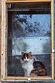 Cat looking through the window, Krasnodar, May, 2013.jpg