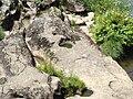 Cauce río Tambre 1.jpg