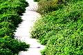 Cement Path (1444964185).jpg