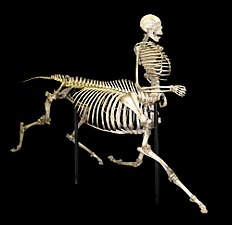 Centaur skeleton.jpg