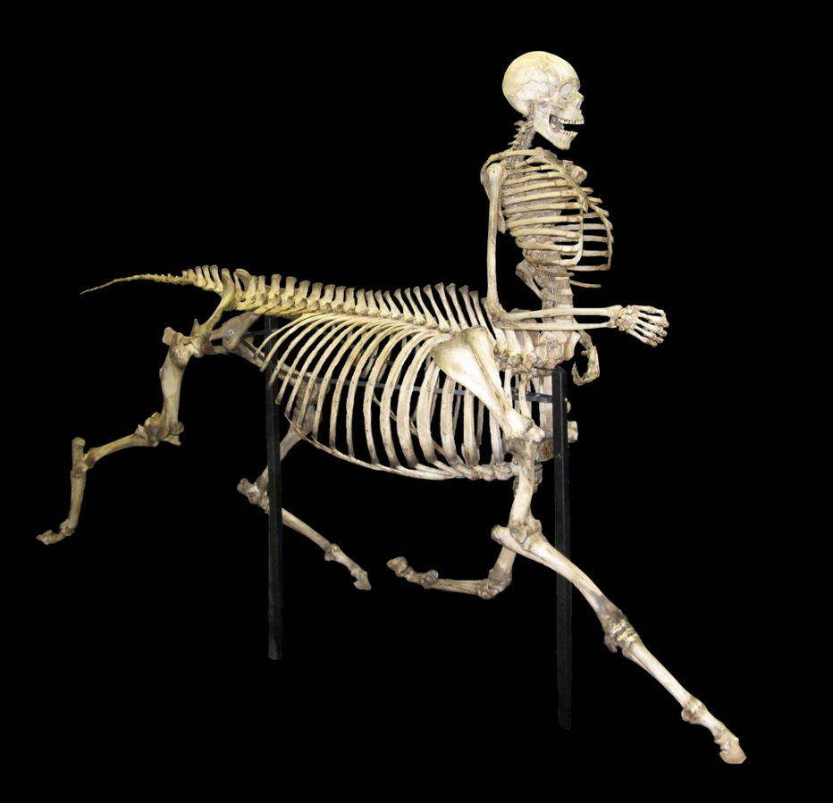 Centaur Skeleton Depiction
