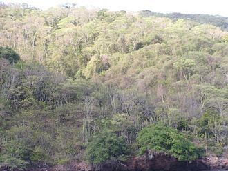Tropical and subtropical dry broadleaf forests - Trinidad and Tobago dry forest on Chacachacare showing the dry-season deciduous nature of the vegetation