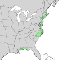 Chamaecyparis thyoides range map 2.png