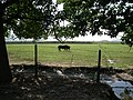 Chancón, caballos. - panoramio.jpg