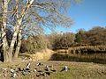 Chisinau Dendrarium - spring, birds, lake.jpg