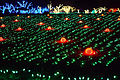 Christmas lights pumpkin farm.jpg