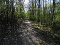 Chuchelský háj, Malá Chuchle, cesta od Čertovy strouhy k Holyni.jpg