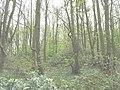 Coed Llanfeirian woodland - geograph.org.uk - 782524.jpg