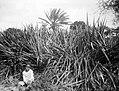 Collectie Nationaal Museum van Wereldculturen TM-10021210 Een kind zit aan de rand van het hoogstaande gras Sint Eustatius fotograaf niet bekend.jpg