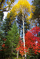 Colorful mix near Mogollon Rim 2010 (5136301985).jpg