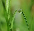 ComputerHotline - Water droplet (by) (7).jpg
